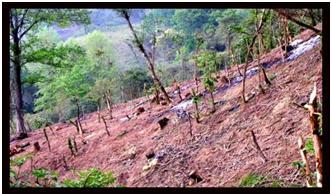Tala y quema del bosque serranía de coraza